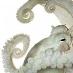 Нервная система у обыкновенного осьминога гораздо сложнее, чем у большинства беспозвоночных. Может ли он думать? Обладает ли сознанием? Исследователи пока не знают ответов на эти вопросы.