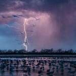 Молния освещает небо неподалёку от Вуд Ривер, штат Небраска, и примерно 413 000 канадских журавлей, прилетающих на насест на отмель реки Платт.