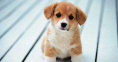 Топ-10 рабочих мест в США для любителей животных