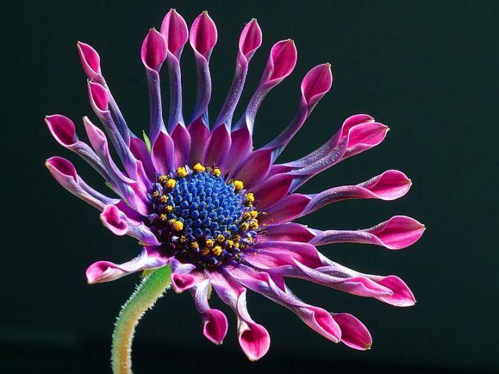 Топ-10 самых красивых живых цветов
