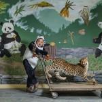 Смотритель панд в Китае использует чучело леопарда, чтобы обучить молодых панд бояться своего злейшего врага в дикой природе.